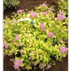 Portfolio-flowerbed-4