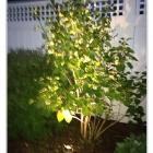 Portfolio-tree-1